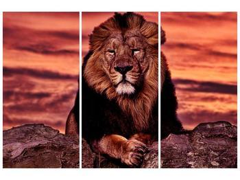 Obraz krále zvířat (F001507F120803PCS)