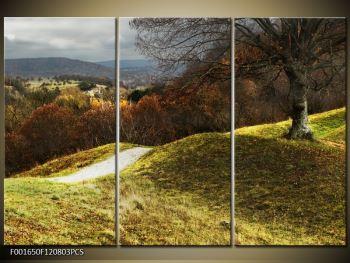 Obraz podzimního pahorku (F001650F120803PCS)