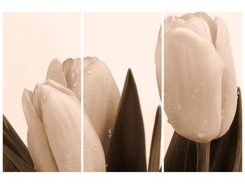 Krásný obraz tulipánů (F001883F120803PCS)