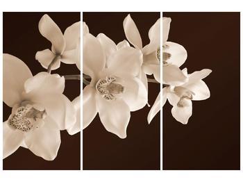 Krásný obraz bílých květin (F001888F120803PCS)