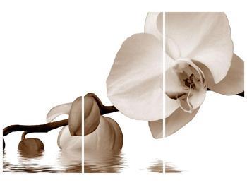 Krásný obraz bílé orchideje (F001900F120803PCS)