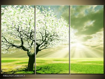 Obraz stromu na jaře (F002291F120803PCS)