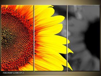 Obraz květu slunečnice (F002400F120803PCS)