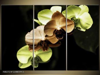 Obraz hnědých a zelených orchideí  (F002723F120803PCS)