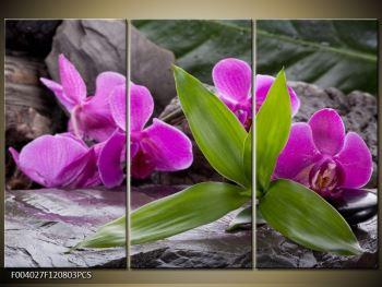 Obraz fialových orchidejí s listím (F004027F120803PCS)