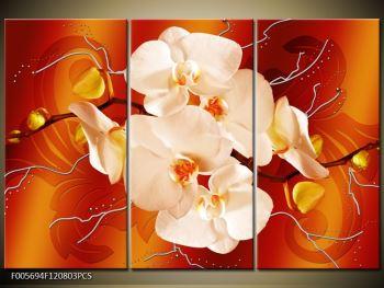Obraz bílých orchidejí (F005694F120803PCS)