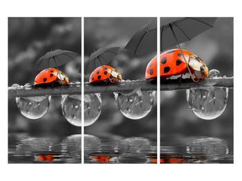 Obraz lienok sedembodkových s dáždnikmi (K012059K120803PCS)