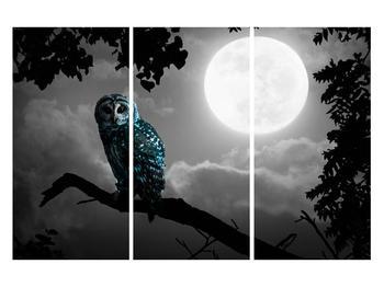 Tablou cu bufnița nocturnă (K012185K120803PCS)