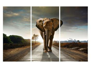 Tablou cu elefant (K012479K120803PCS)