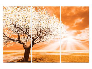 Oranžový obraz stromu (V020095V120803PCS)