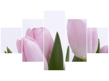 Obraz růžových tulipánů (F000389F12570)