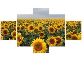 Obraz slunečnicového pole (F000397F12570)