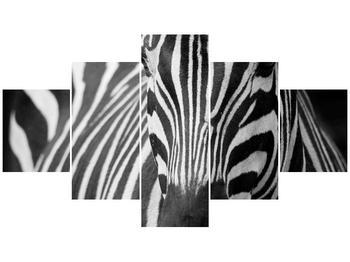 Obraz černobílého detailu zebry (F000715F12570)