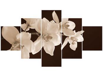 Krásný obraz bílých květin (F001888F12570)
