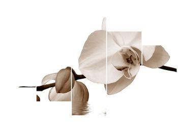Krásný obraz bílé orchideje (F001900F12570)