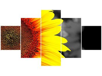 Obraz květu slunečnice (F002400F12570)