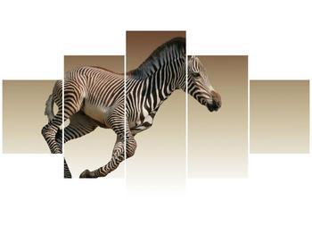 Obraz běžící zebry (F002416F12570)