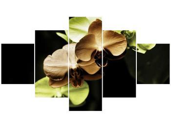 Obraz hnědých a zelených orchideí  (F002723F12570)