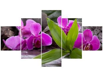 Obraz fialových orchidejí s listím (F004027F12570)