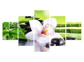 Obraz orchideje (K011995K12570)