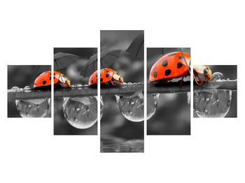 Obraz lienok sedembodkových s dáždnikmi (K012059K12570)