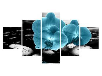 Obraz modrých květů orchideje (K012398K12570)