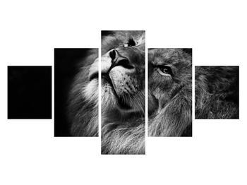 Černobílý obraz lva (K012767K12570)