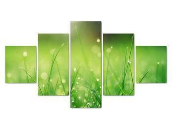 Obraz - rosa na tráve (V020169V12570)