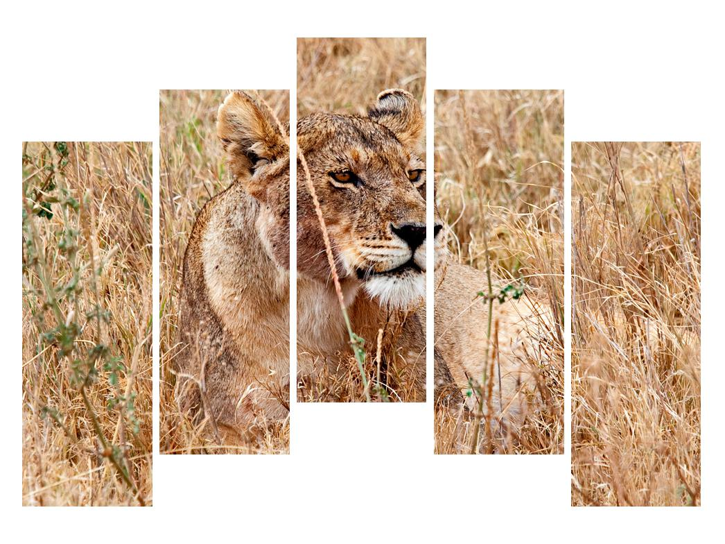 Moderna slika K011559K12590 (K011559K12590)