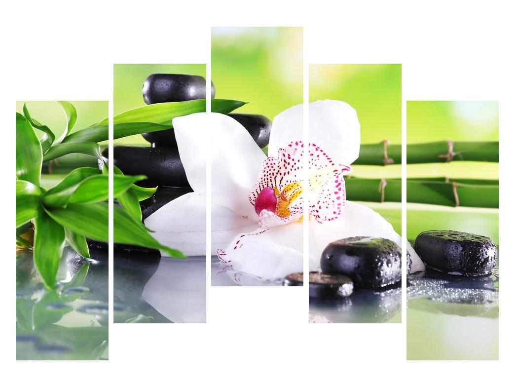 Slika orhideje (K011995K12590)