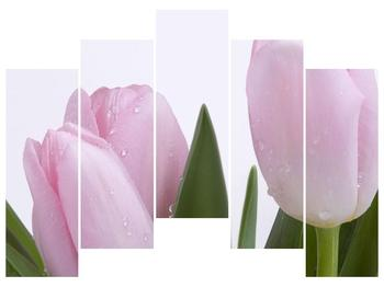 Obraz růžových tulipánů (F000389F12590)