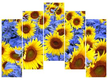 Obraz slunečnic (F000619F12590)