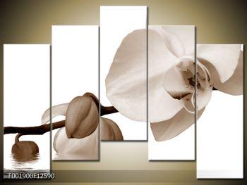 Krásný obraz bílé orchideje (F001900F12590)