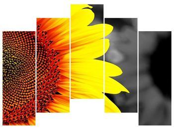 Obraz květu slunečnice (F002400F12590)