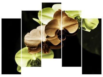 Obraz hnědých a zelených orchideí  (F002723F12590)