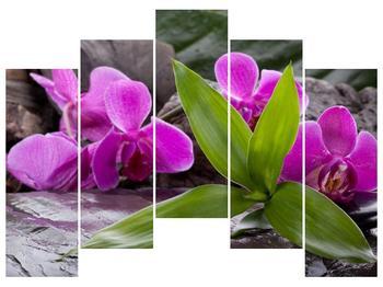 Obraz fialových orchidejí s listím (F004027F12590)