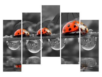 Obraz lienok sedembodkových s dáždnikmi (K012059K12590)