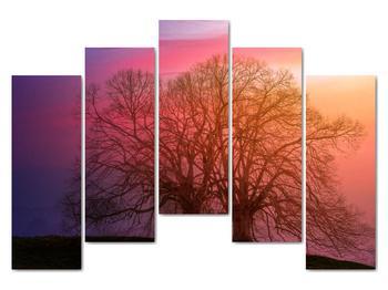 Obraz stromov v hmle (V020088V12590)