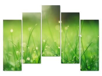 Obraz - rosa na tráve (V020169V12590)