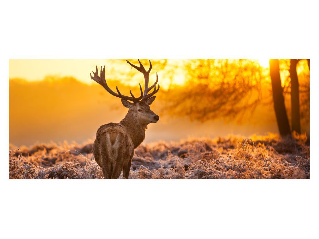 Slika jelena (K011281K14558)