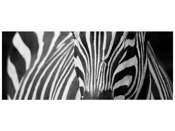 Obraz černobílého detailu zebry (F000715F14558)