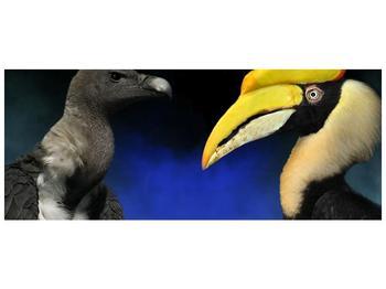 Obraz ptačích zobáku (F001358F14558)
