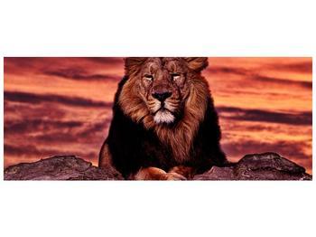 Obraz krále zvířat (F001507F14558)