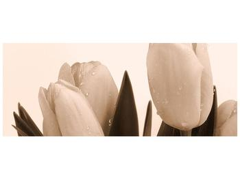 Krásný obraz tulipánů (F001883F14558)