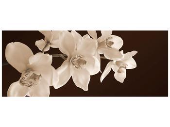 Krásný obraz bílých květin (F001888F14558)