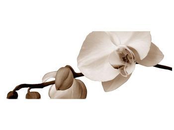 Krásný obraz bílé orchideje (F001900F14558)