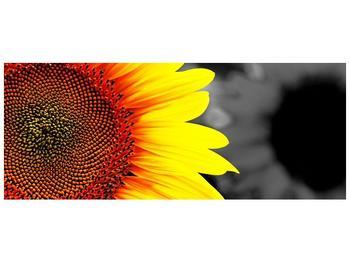Obraz květu slunečnice (F002400F14558)
