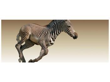 Obraz běžící zebry (F002416F14558)