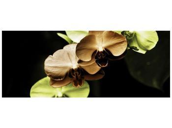 Obraz hnědých a zelených orchideí  (F002723F14558)