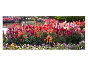 Obraz kvetín (K012048K14558)